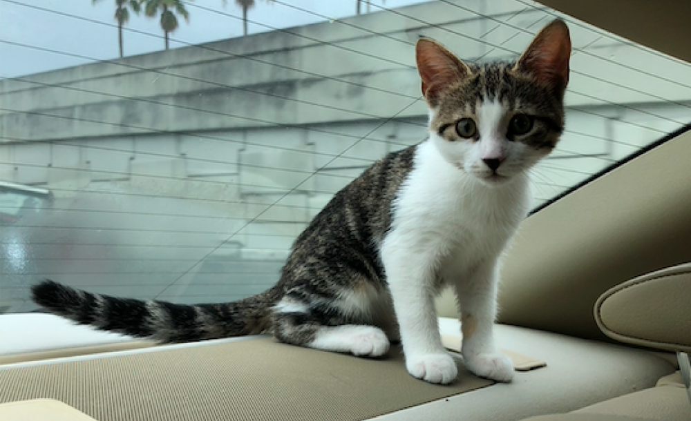 Kitten sitting in a car