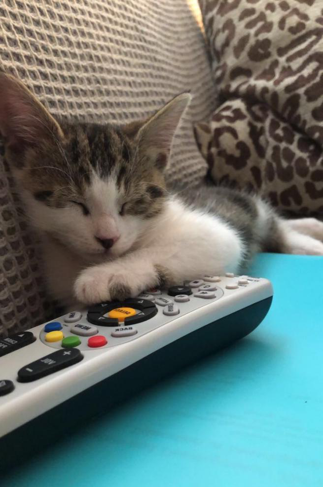 Kitten, asleep on a notebook with her paw on TV remote